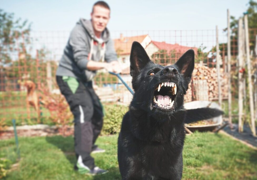 Aggressive dog is barking. Young man with angry black dog on the leash.